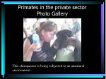 primates in the private sector photo gallery36
