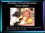 primates in the private sector photo gallery38