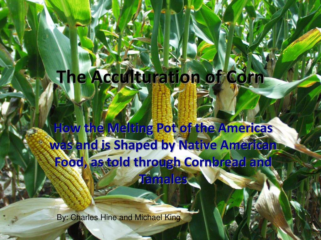 the acculturation of corn l.