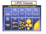 lipid classes