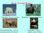 real living bears