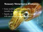 sensory structures features