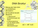 dna struktur24