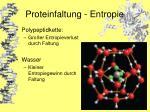 proteinfaltung entropie18