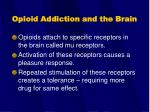 opioid addiction and the brain