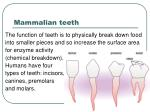 mammalian teeth