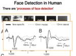 face detection in human