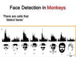 face detection in monkeys