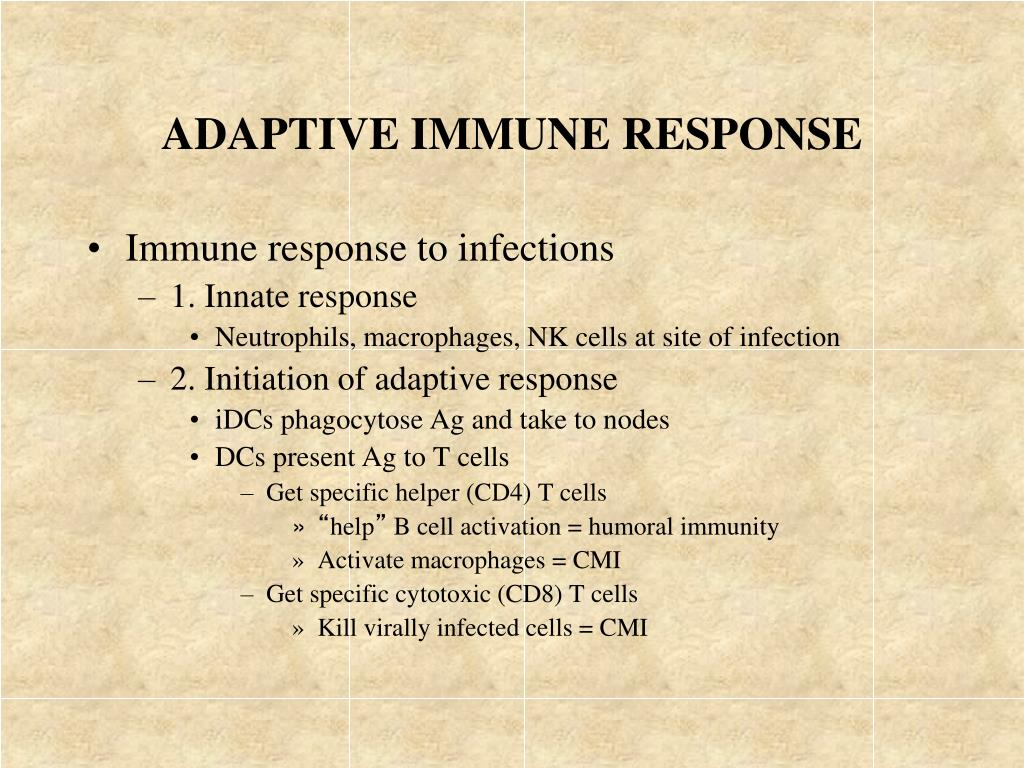adaptive immune response l.