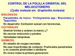 control de la polilla oriental del melocotonero cydia molesta sin grapholita molesta