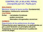 control de la sila del peral cacopsilla pyri sin psylla pyri