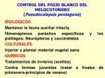 control del piojo blanco del melocotonero pseudocalapsis pentagona