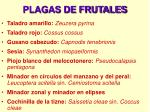 plagas de frutales22