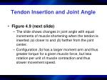 tendon insertion and joint angle