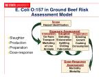 e coli o 157 in ground beef risk assessment model
