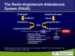 the renin angiotensin aldosterone system raas35