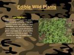 edible wild plants109