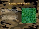 edible wild plants110