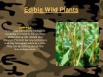 edible wild plants111