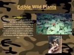 edible wild plants114