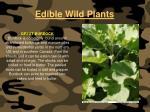 edible wild plants115
