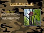 edible wild plants116