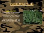 edible wild plants117