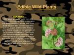 edible wild plants118