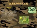 edible wild plants119