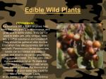 edible wild plants120