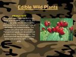 edible wild plants121