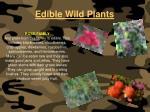 edible wild plants122