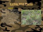 edible wild plants123