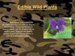 edible wild plants124
