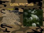 edible wild plants125