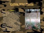 edible wild plants126