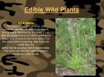 edible wild plants127