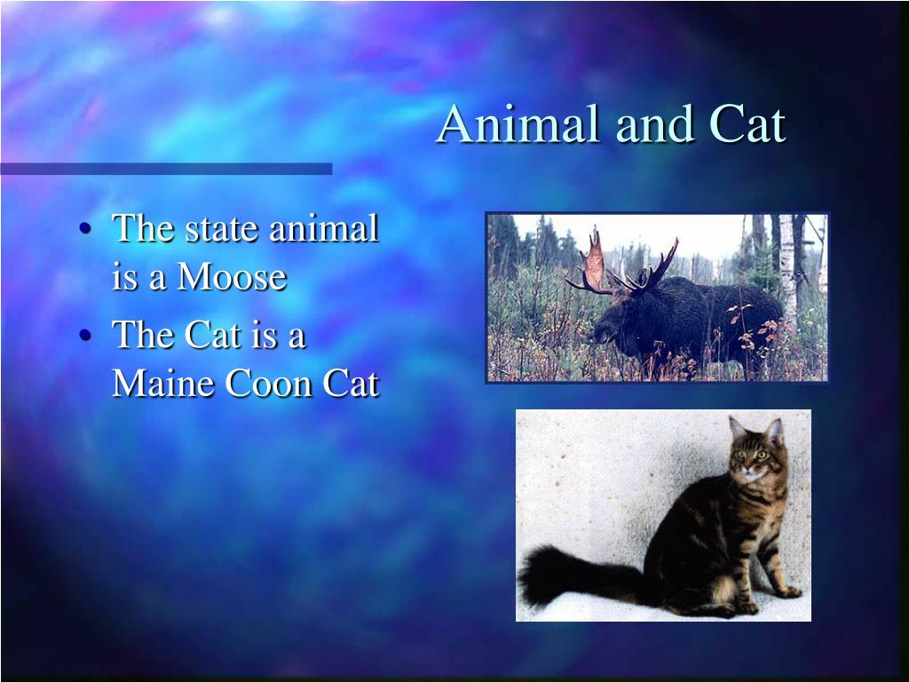 Animal and Cat