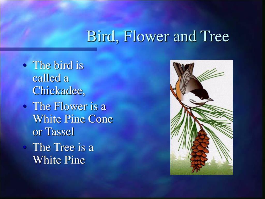 Bird, Flower and Tree