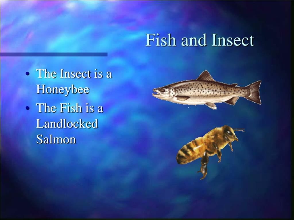 Fish and Insect