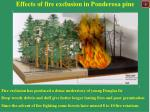 effects of fire exclusion in ponderosa pine