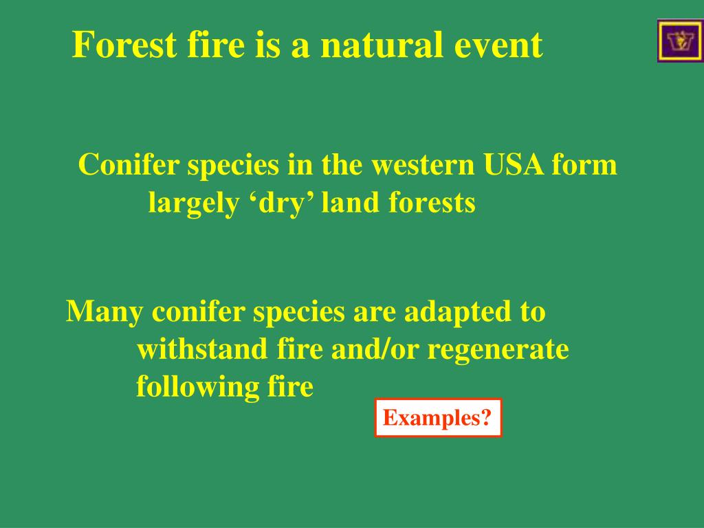 Forest fires are a natural events