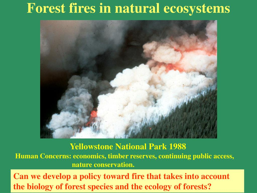 Forest fires in natural ecosystems