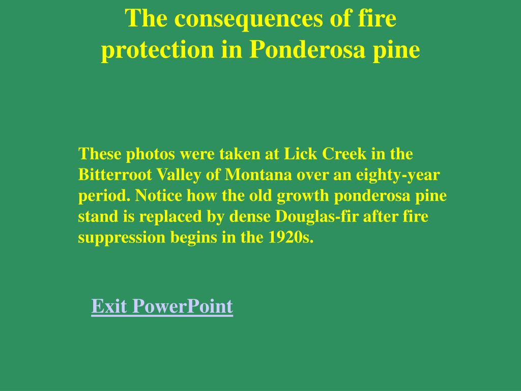 The consequences of fire protection in Ponderosa pine