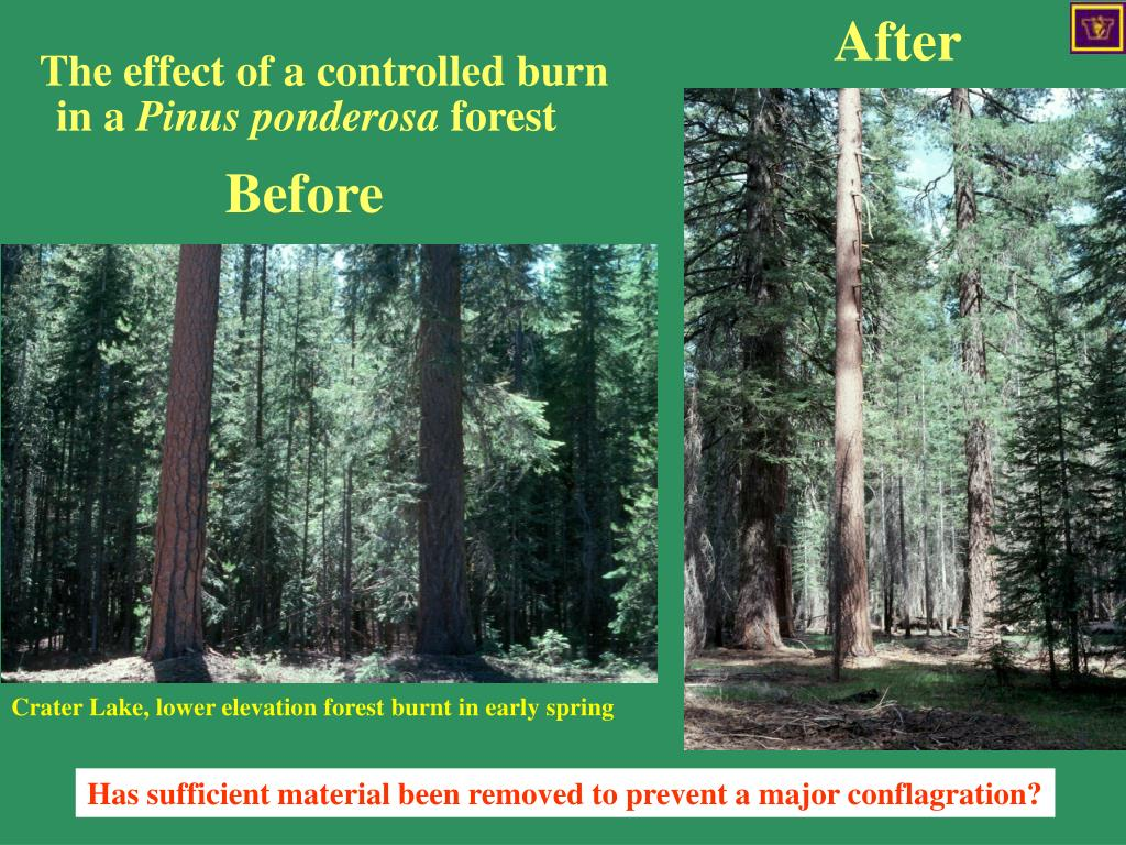 The effect of a controlled burn