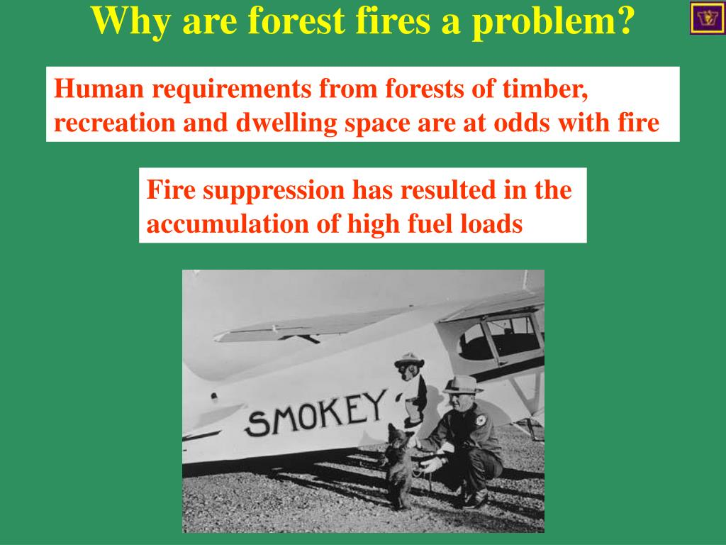 Why are forest fires a problem?
