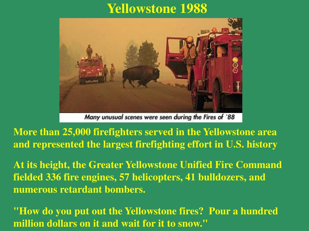 Yellowstone 1988