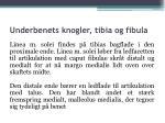 underbenets knogler tibia og fibula15