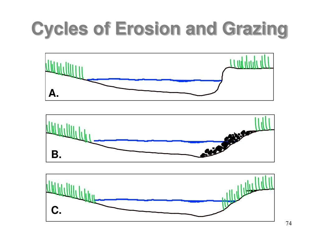 Cycles of Erosion and Grazing