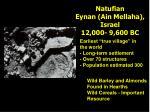 natufian eynan ain mellaha israel 12 000 9 600 bc